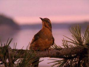 Twin Peaks Opening Scene